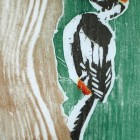 Woodpeckers 1 (Detail – Greater Spotted)